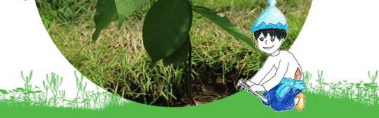 เทพารักษ์ 4.0 พิทักษ์ต้นสาละอินเดีย-1