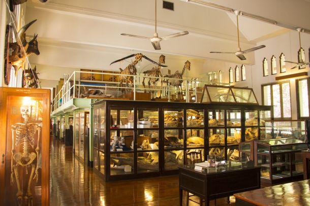 พิพิธภัณฑสถานธรรมชาติวิทยาแห่งจุฬาลงกรณ์มหาวิทยาลัย